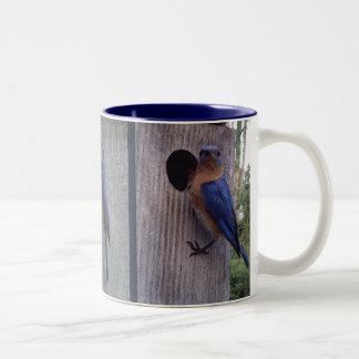 Bluebirds en la taza de la caja