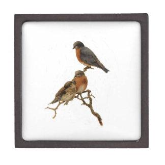 Bluebirds Family Premium Gift Box