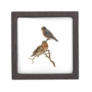 Bluebirds Family Premium Jewelry Boxes