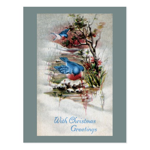 Bluebirds in Winter Vintage Christmas Postcard