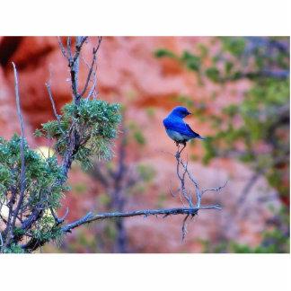 Bluebirds Photo Sculptures