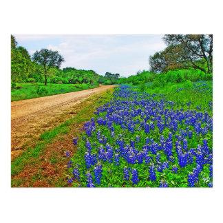 Bluebonnet Back Road Postcard