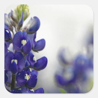bluebonnet blue square sticker