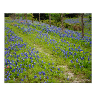Bluebonnet Country Road Poster