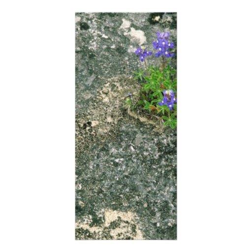 Bluebonnet de Tejas Plantillas De Lonas