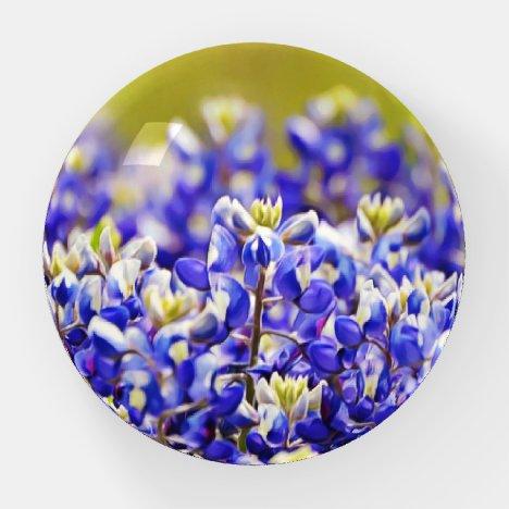 Bluebonnet Flowers Wild Flower Paperweight