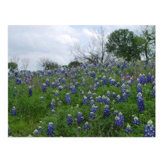 Bluebonnet Hill Postcard