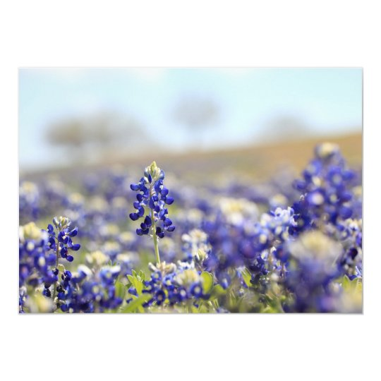 Bluebonnet Invitation