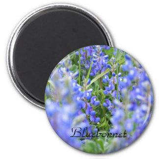 Bluebonnet magnet