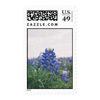 bluebonnet postage