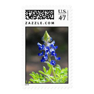 Bluebonnet Postage Stamp