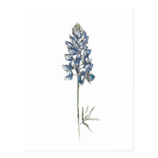 Bluebonnet Postcard