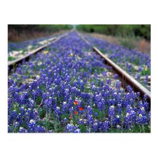 Bluebonnet Railroad Postcard