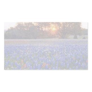 bluebonnet sunrise business card