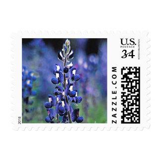 Bluebonnet (Texas) Postage