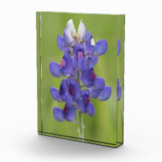 Bluebonnet Texas Wildflowers Award
