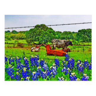 Bluebonnets and Longhorns Texas Hill Country Postcards