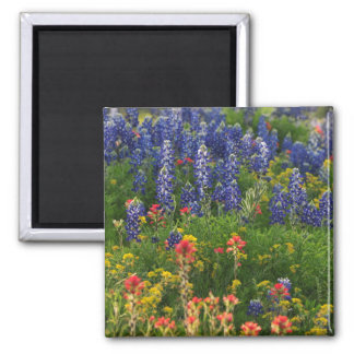 Bluebonnets and Paintbrushes Magnet