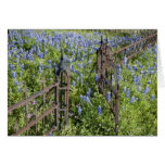 Bluebonnets and phlox surrounding cemetery gate greeting card