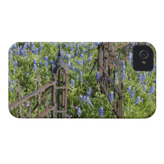 Bluebonnets and phlox surrounding cemetery gate iPhone 4 Case-Mate case