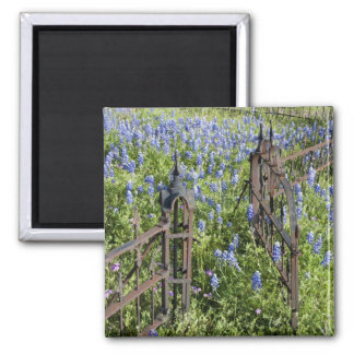 Bluebonnets and phlox surrounding cemetery gate magnet