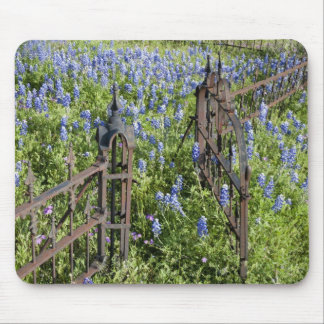 Bluebonnets and phlox surrounding cemetery gate mouse pad