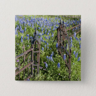 Bluebonnets and phlox surrounding cemetery gate pinback button