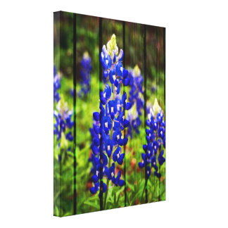 Bluebonnets and Wood Canvas Print