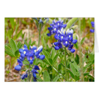 Bluebonnets Close Up Greeting Card
