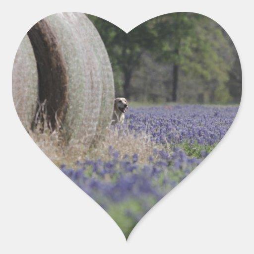 Bluebonnets de Haybales Pegatina Corazón