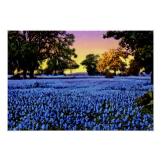 Bluebonnets de Tejas que cubren un campo en la pue Poster
