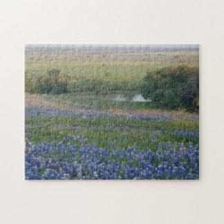 Bluebonnets de Tejas Rompecabeza Con Fotos