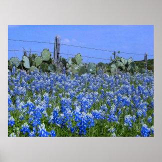 Bluebonnets del país de la colina de Tejas/impresi Posters