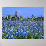 Bluebonnets del país de la colina de Tejas/impresi Póster
