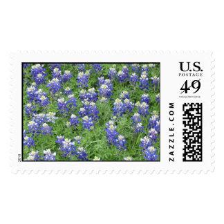 Bluebonnets en un campo timbre postal