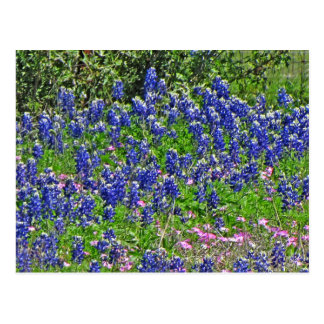 Bluebonnets on Yeager Creek Rd., Johnson City, TX Postcard