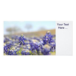 Bluebonnets Photo Card