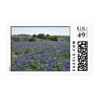 Bluebonnets Postage
