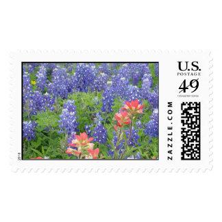Bluebonnets Postage Stamp