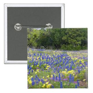 Bluebonnets, primrose, and phlox button