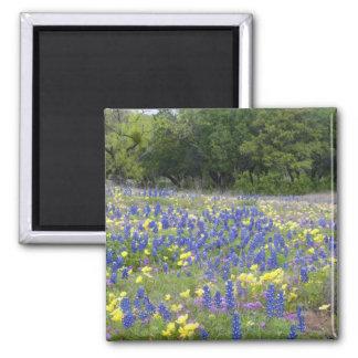 Bluebonnets, primrose, and phlox magnet