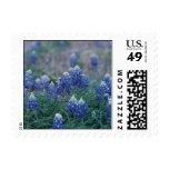 Bluebonnets Stamps