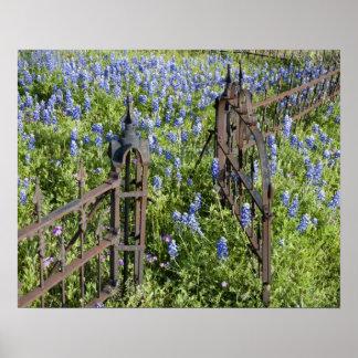 Bluebonnets y puerta circundante del cementerio de póster