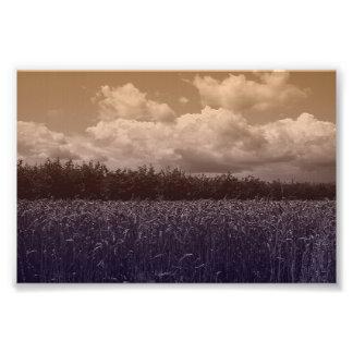 Bluecorn Blues Photo Print
