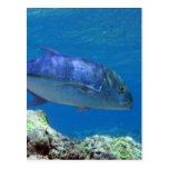 Bluefin Trevally Postales