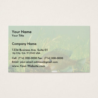 Bluegill Business Card