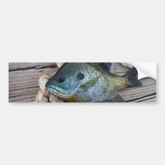 Bluegill fish on dock and rope car bumper sticker