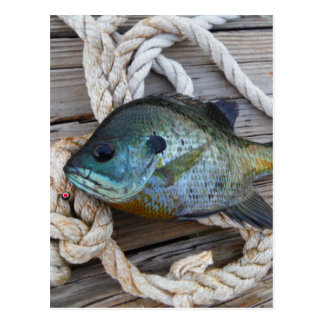 Bluegill fish on dock and rope postcard