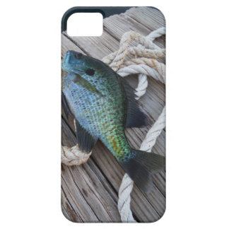 bluegill on dock iPhone SE/5/5s case