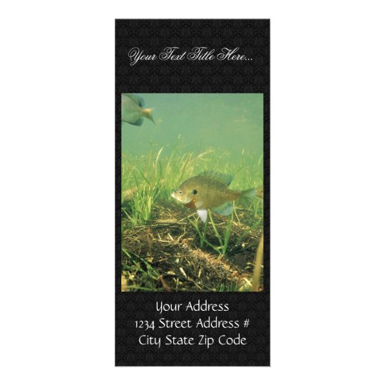 Bluegill Rack Card